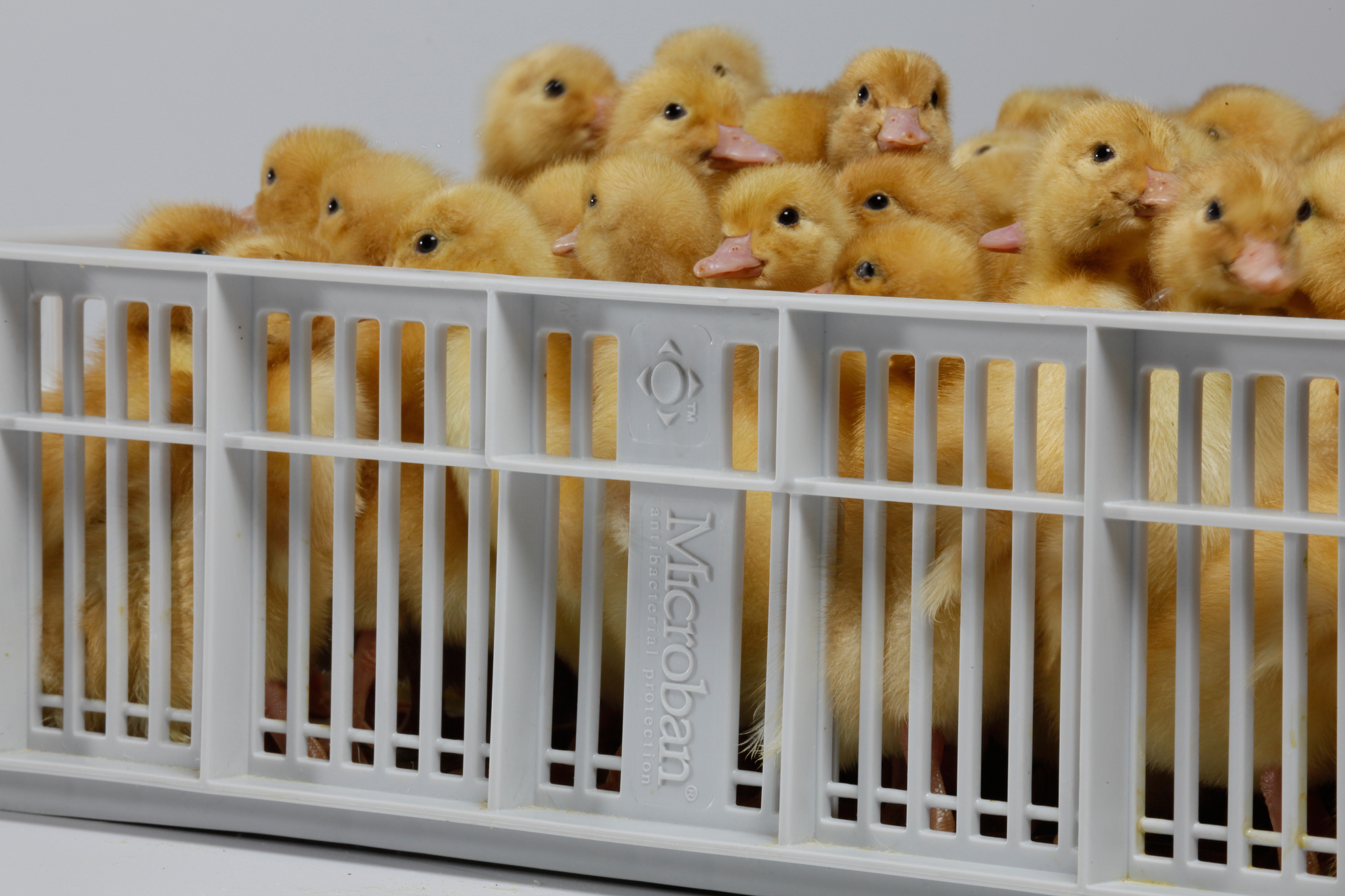 Microban Pas Reform Poultry Industry Egg Safety Hatchery Equipment Hatching Basket Egg Incubation